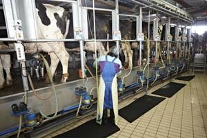Korzystne prognozy dla unijnego sektora mleczarskiego na najbliższe 10 lat