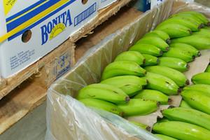 Targban przejmuje od Del Monte Poland dużą dojrzewalnię bananów