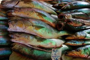 W branży rybnej zanika efekt sezonowości