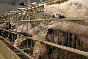 Prezes WIR: Skutki embarga najboleśniej odczują hodowcy z Wielkopolski