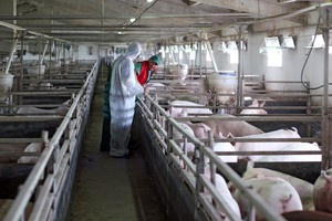 Problem na rynku wieprzowiny będzie powracał
