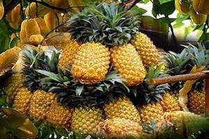 Wysokie ceny ananasów