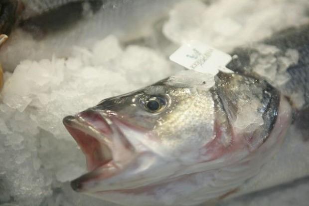Nowy dystrybutor ryb w Broniszach