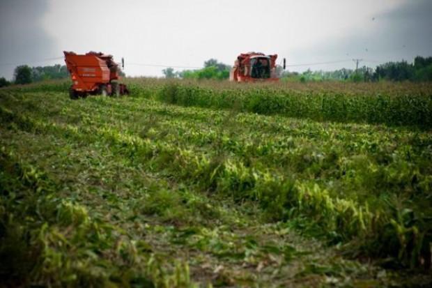 Raport: 10 lat Polski w UE unowocześniło rolnictwo i przetwórstwo
