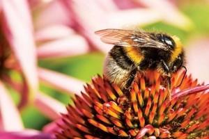 Raport Greenpeace: Rolnictwo przemysłowe szkodzi pszczołom