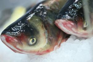 Centrum Pierwszej Sprzedaży Ryb powstało w gminie Mielno