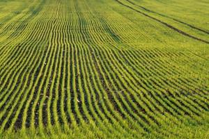 Uprawa ziół w Polsce ma dobre perspektywy na przyszłość