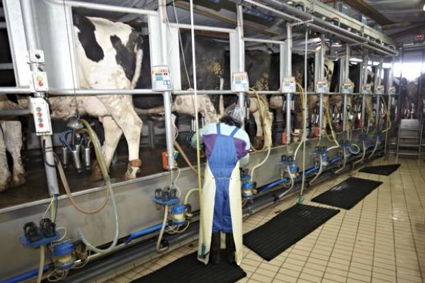 Dynamicznie rośnie produkcja mleka w UE