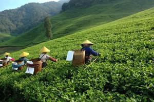 Azjaci przyjadą pracować w polskich gospodarstwach?