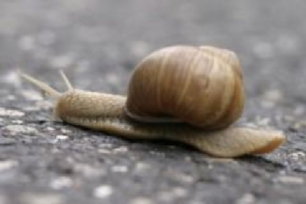 Polskie ślimaki chcą wyprzedzić konkurencję