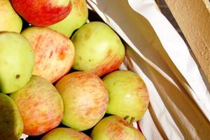 Prezes SEP: Producenci owoców potrzebują nowych rozwiązań prawnych