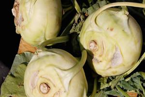 Eksperci BGŻ o embargu na polskie owoce i warzywa