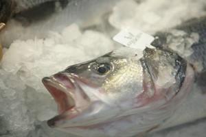 Ryby z Bałtyku niewskazane dla młodych kobiet i dzieci