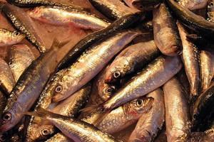 Połowy ryb na Bałtyku niższe o ponad jedną czwartą, niż przed rokiem