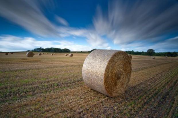 Trwa licytacja na coraz wyższe prognozy światowych zbiorów pszenicy i kukurydzy