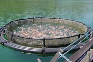 Producenci ryb zadowoleni z wyroku TSUE ws. opłat za pobór wody