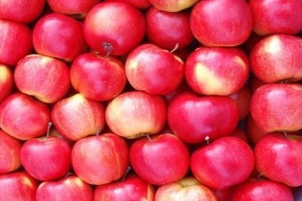 Sieci handlowe częściej promują jabłka