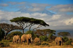 Coraz więcej firm handluje z Afryką