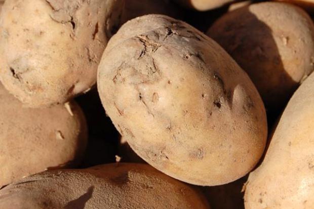 Dramat na rynku ziemniaków