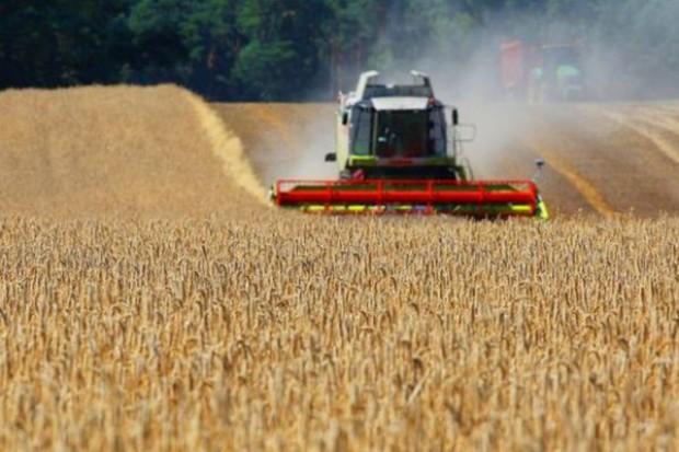 Żniwa spowodowały spadek cen zbóż