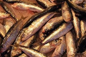 Ministrowie krajów UE zajmą się kwotami połowowymi dla ryb z Bałtyku