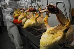 Ukraina chce podbić europejski rynek foie gras
