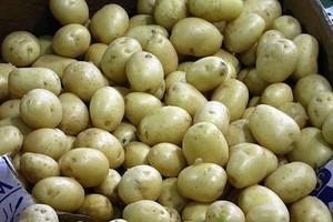 Spadek cen ziemniaków w Polsce i na rynkach zagranicznych