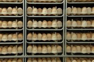 Przyjęto poprawki do noweli ustawy o jakości żywności. Będą zmiany na rynku jaj i mięsa