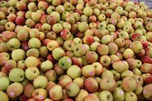 Ceny jabłek na krajowym rynku zanotowały niewielki wzrost