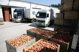 Ceny jabłek przemysłowych wzrosły wraz z końcem zbiorów