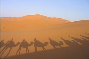 Maroko to atrakcyjny kierunek dla polskich eksporterów żywności