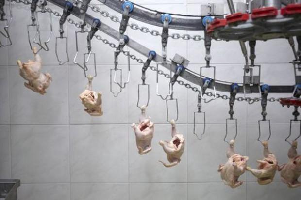 Polska zwiększa udział w unijnym eksporcie mięsa drobiowego
