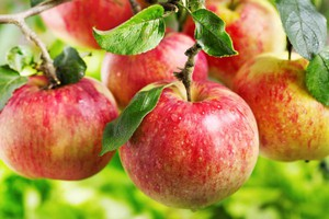 ARR znów przyjmowała wnioski o rekompensaty dla producentów jabłek i gruszek