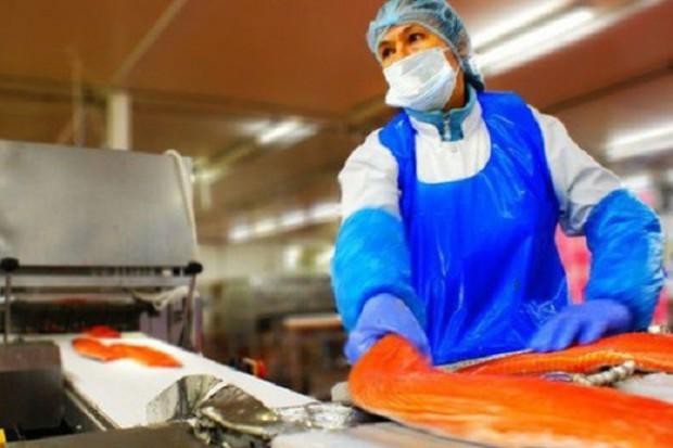 Firmy łososiowe z Polski bogacą się na rynku niemieckim