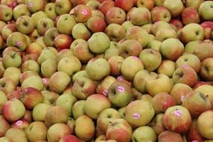 Ceny jabłek w skupie na eksport o połowę niższe niż przed rokiem