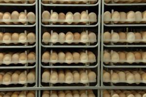 Dalszy wzrost cen jaj spożywczych