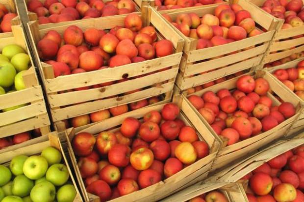 Embargo może wpłynąć na szybszą konsolidację branży sadowniczej