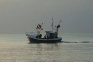 MRiRW dokonało podziału kwot połowowych na Bałtyku na 2015 r.