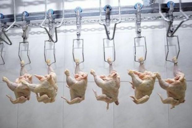 Polska umacnia pozycję na unijnym rynku nieprzetworzonego mięsa drobiowego