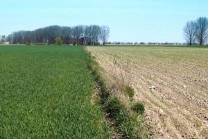 ANR: Ceny gruntów rolnych wzrosły o 17 proc. w 2014 r.