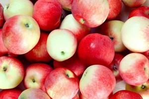 Nieobjęte embargiem kraje bałkańskie szansą dla eksporterów jabłek z Polski