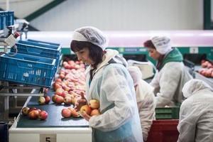 Rzecznik Kremla: Możemy uchylić embargo, jeśli zachodnie firmy wybudują u nas fabryki