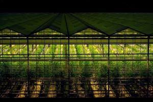 Citronex planuje rozbudowę szklarni w Bogatyni oraz Siechnicach