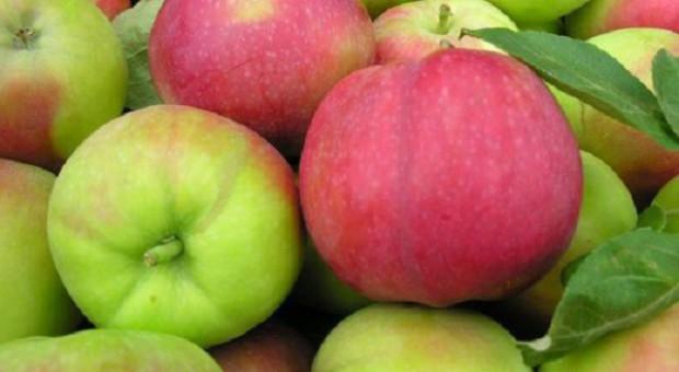 Polskie jabłka mają szansę trafić do Wietnamu