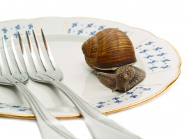 Produkcja ślimaka w Polsce rośnie