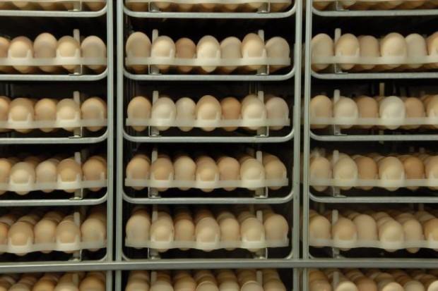 Za średnią, polską pensję można kupić 7962 jaja