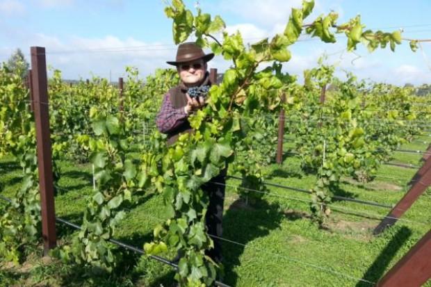 Polska ma szanse stać się znana z produkcji win