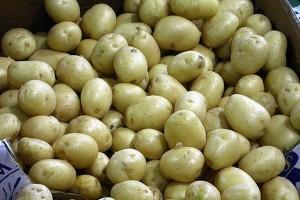 W 2014 roku spadł eksport ziemniaków