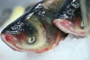 Większa dynamika cen ryb i owoców morza