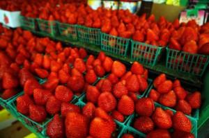Na Broniszach truskawki kosztują 15-20 zł/kg